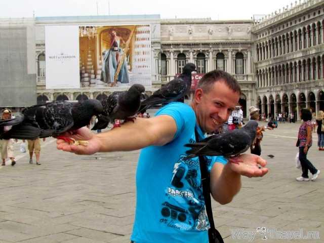 Пернатые жители Венеции
