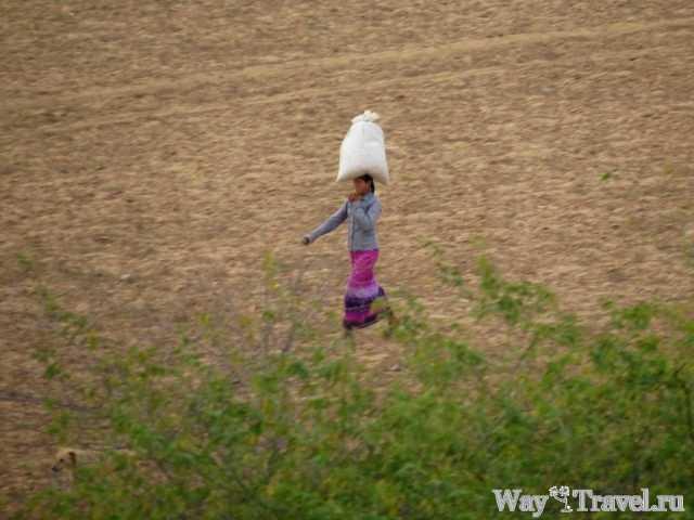Бирмаская девушка (Myanmar girl)