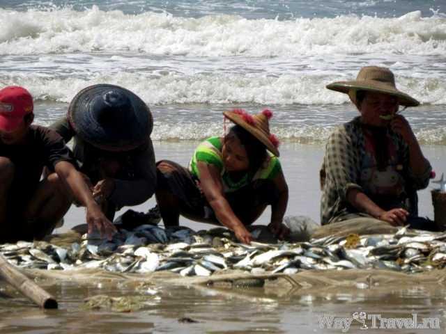 Рыбный улов Нгве Саунг ( Fish catch Ngwe Saung)