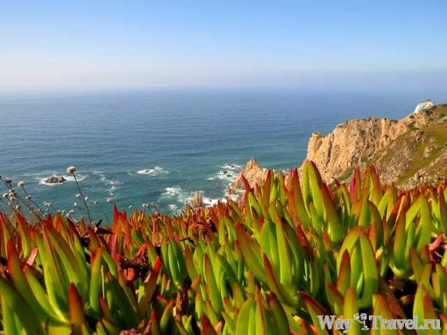 Природа Мыса Рока (Cabo da Roca nature)
