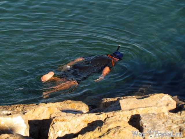 Снорклинг в Валенсии (Snorkeling in Valencia)