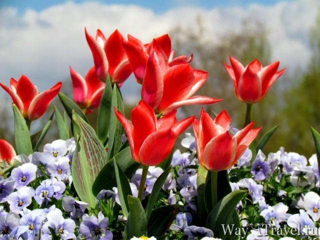 Весна в Парке Сан-Суcи (Spring in Sans Souci Park)