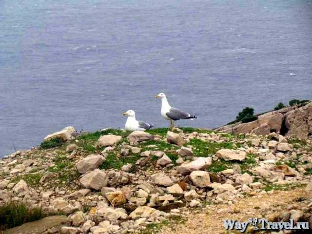 Остров Фриоль (Frioul Island)