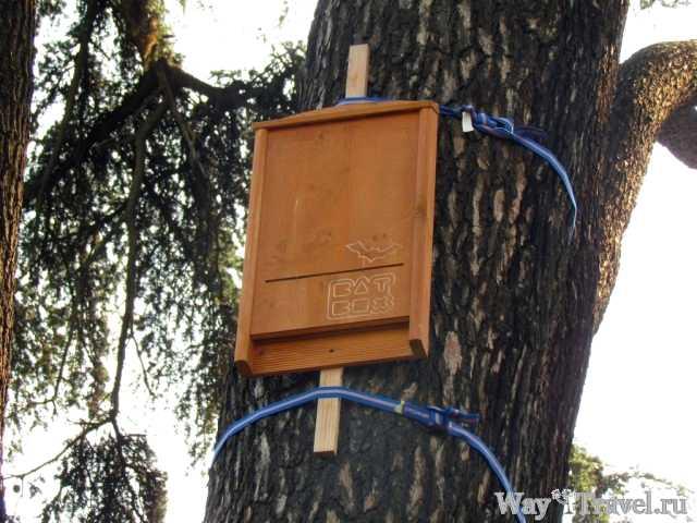 Домик для летучих мышей (Bat Box)
