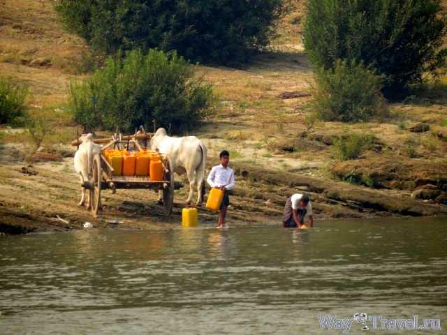 Местные жители Мьянмы ( Residents of Myanmar)