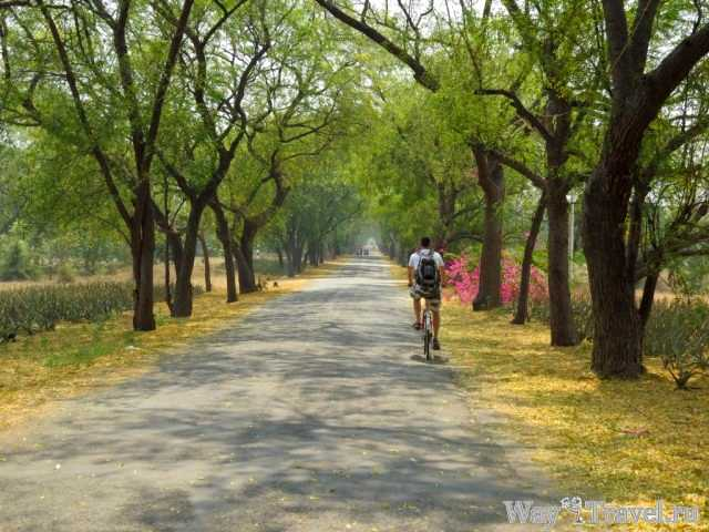По Багану на велосипеде (Bagan by bike)