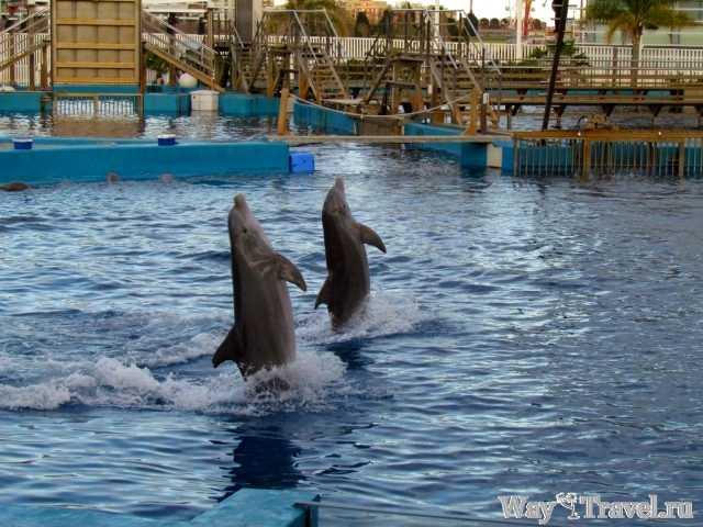 Шоу дельфинов в океанариуме Валенсии (Dolphin show in the Valencia Oceanarium)