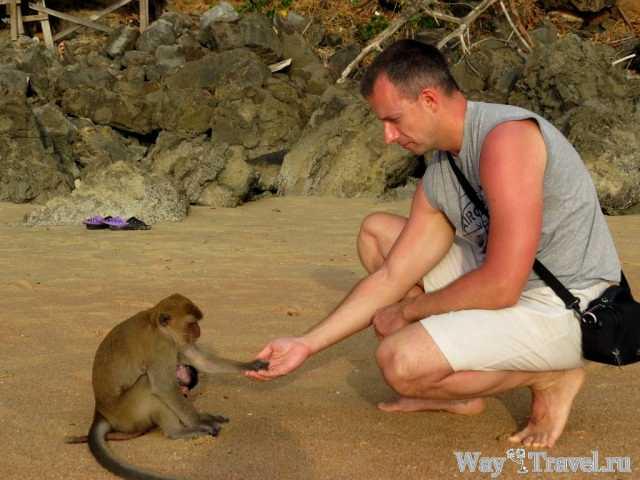 Обезьяны Ао Нанга ( Ao Nang monkeys)